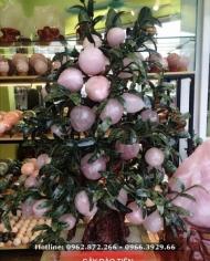 Cây Đào Tiên Đá Thạch Anh Hồng 40, 60, 80 quả